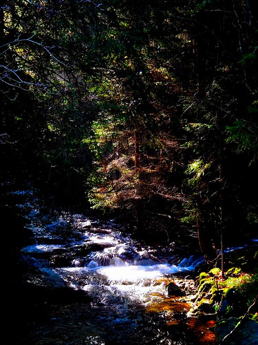 River in the forest / Fluss im Wald