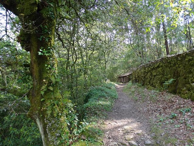 Camino en la Ruta Alto das Torres e Alto da Lagoa