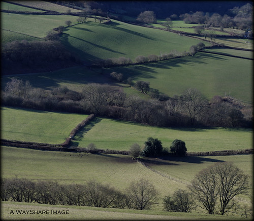 shadow farmland hedge fields powys edw rhulen