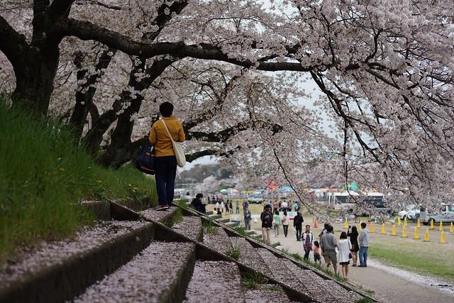 Okazaki_Sakura_217