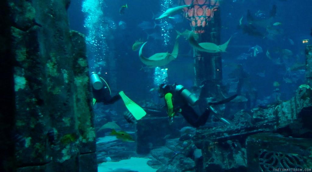 16543427357 b146c7c43c b - {Dubai 2014} 24 hours at Atlantis The Palm