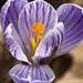 Sign of spring by Shotaku