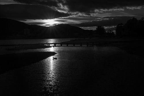 sunset urban bird nature monochrome animal norway river swan flickr published g facebook drammen urbex buskerud otherkeywords