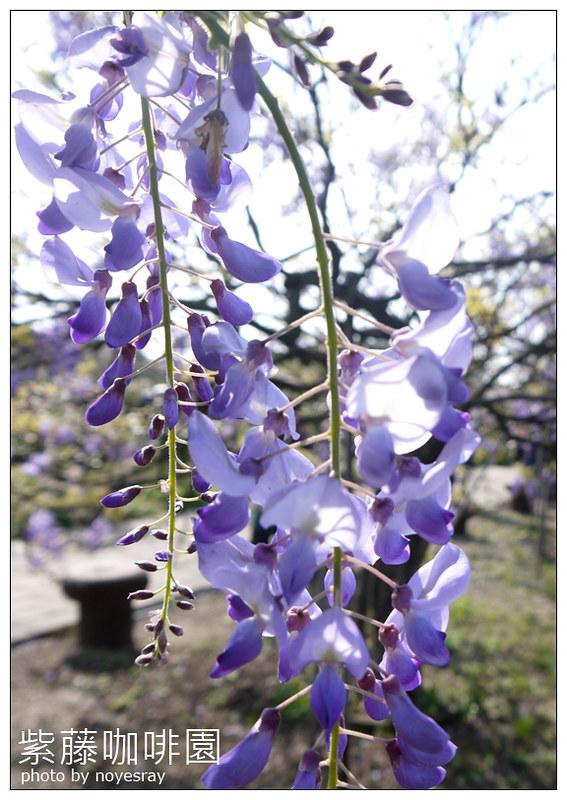 紫藤咖啡園 09