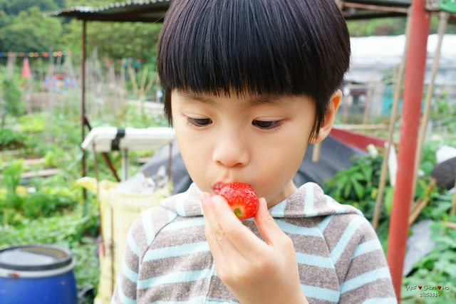 Eating strawberry