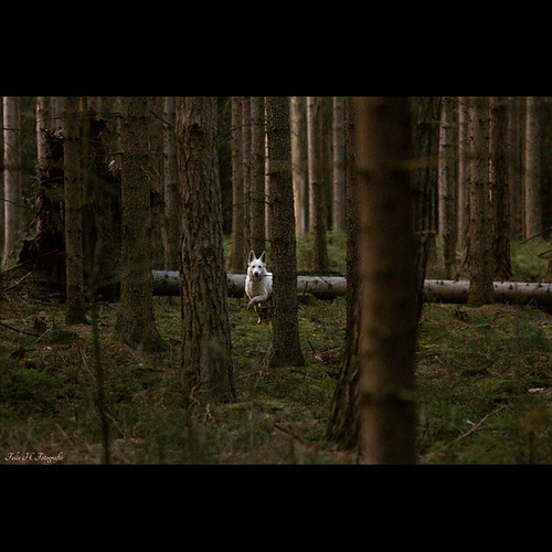 #Facebook  Felix H. Fotografie  📷📷📷📷📷📷🐰🐰🐰📷📷📷📷📷📷📷  #Canon #EOS70d #happy #easter #frohe #Ostern #hund #Wald #forest #landscape #Landschaft #wolf