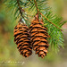 Cones by MNM Photography 2014