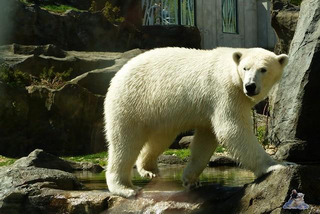 Tierpark Schönbrunn 16.04.2014 23