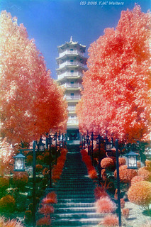 Nan Tien Pagoda (1986 expired Kodak Ektachrome Infrared 2236 35mm film)