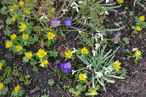Frühling im Märzgarten
