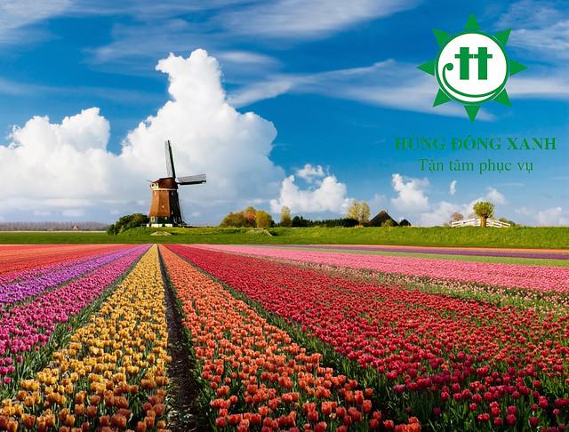 cối xoay gió Hà Lan