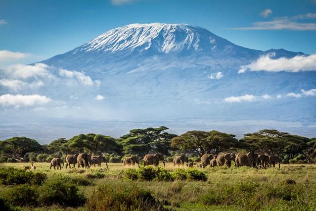 v-Kilimanjaro