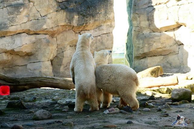 Zoo am Meer 08.03.2015  203