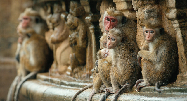 monkeykingdom5346e57790e5e