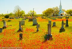 New Berlin Cemetery Wildflowers -- 2015 #1
