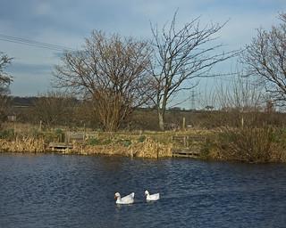 Teeside pond