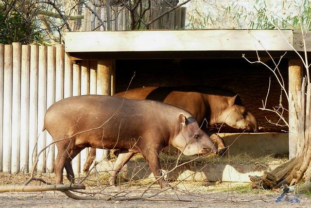 Zoo Berlin 19.03.2015  1