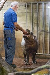 Feeding the hippo