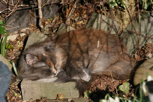 Holly Having a Snooze in the sunshine.