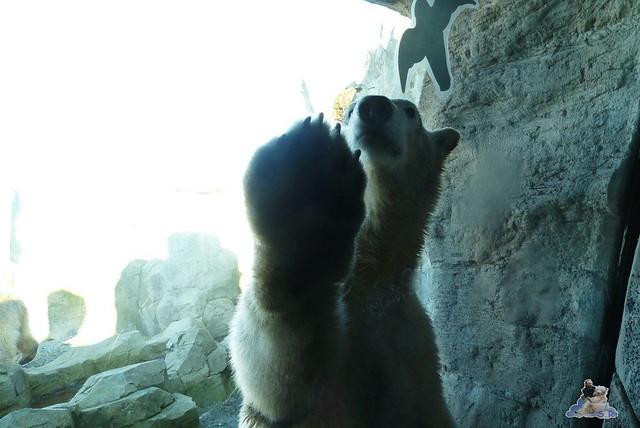 Zoo am Meer 08.03.2015  19