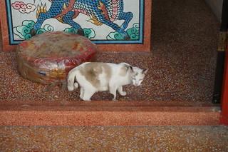 Food market cat