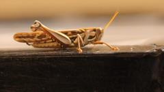 Injured Bug :(