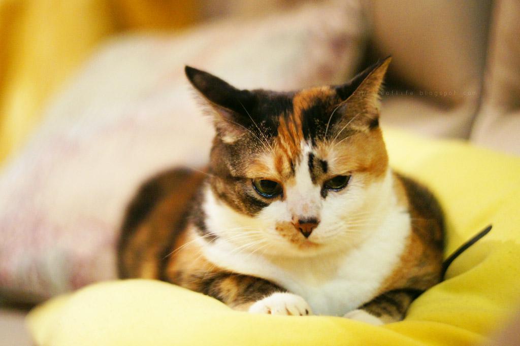 E Meow