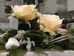 gufi e fiori a bolzano