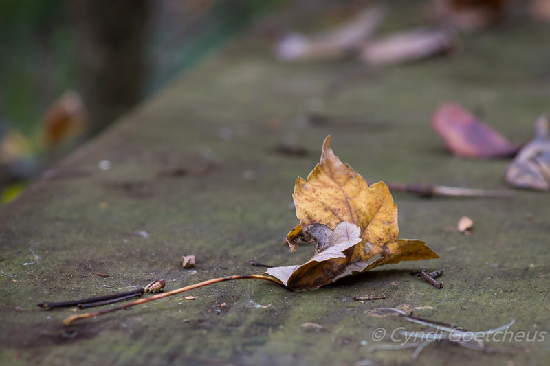 wabi sabi leaf