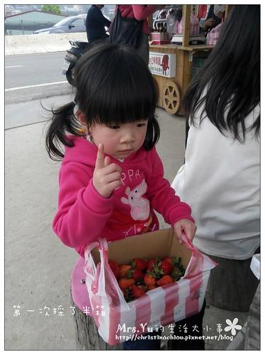 國姓採草莓