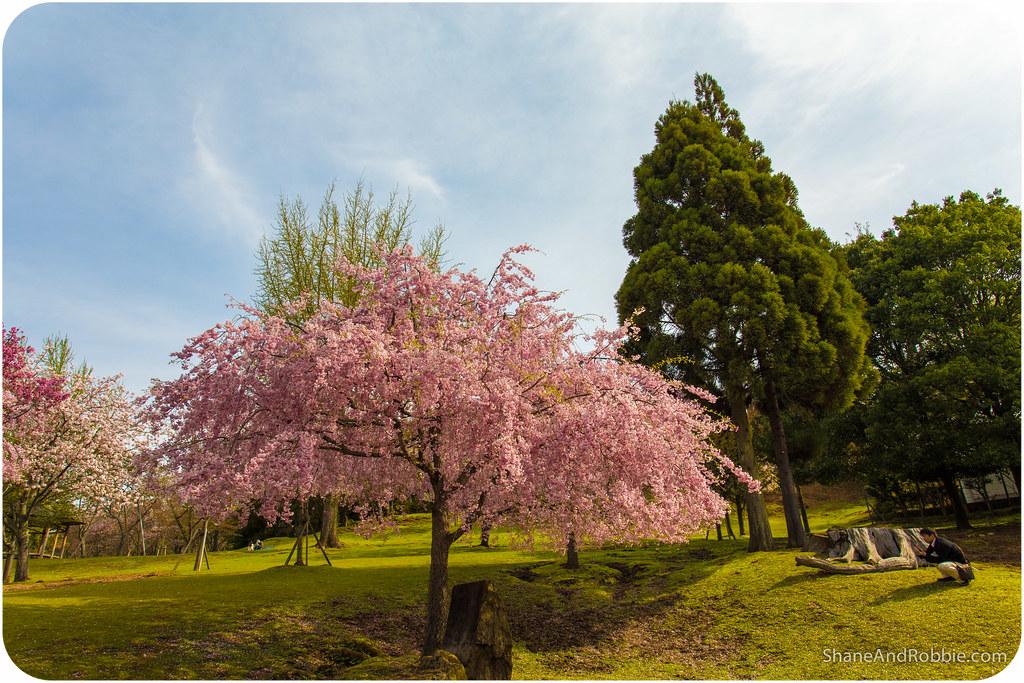 2015-04-13-20150413(Canon EOS 6D)-00150