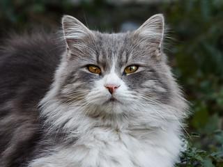 Street cat 96