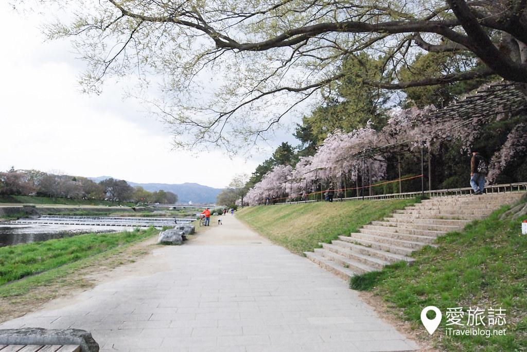 京都赏樱景点 半木之道 13