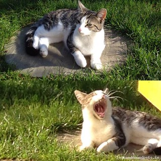 Tue, Apr 21st, 2015 Lost Female Cat - St Catherine's Park, Glenageary, Dublin