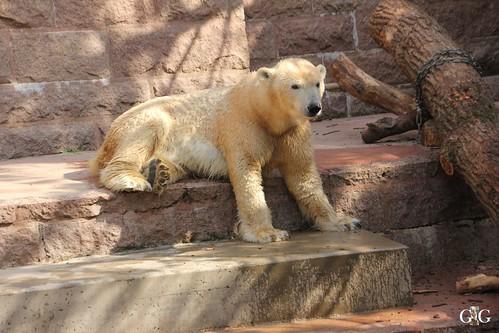 Zoo Rostock 11.04.201559
