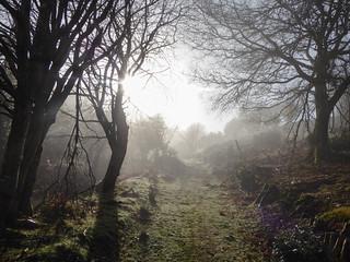 Up Through The Mist