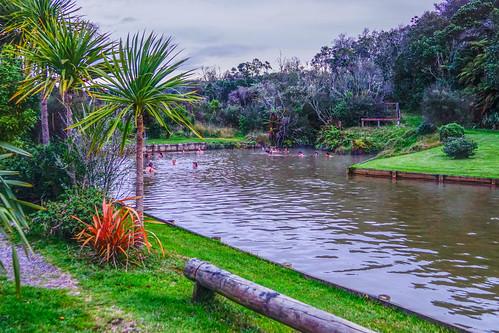 newzealandwaitangi sodaspringsspringssouthislandnorthislandoutdoorlakehamuranaducktourrotorua