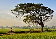 Manang village
