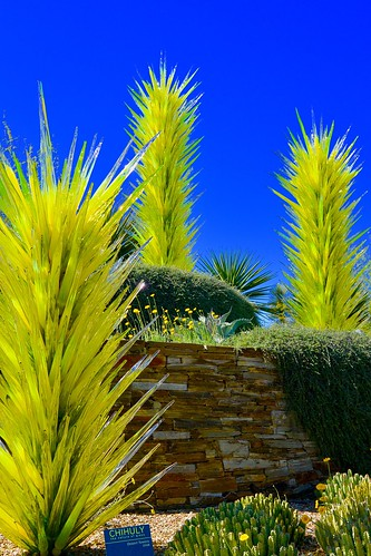 arizona art glass phoenix sculpter dalechihuly blownglass desertbotanicalgarden