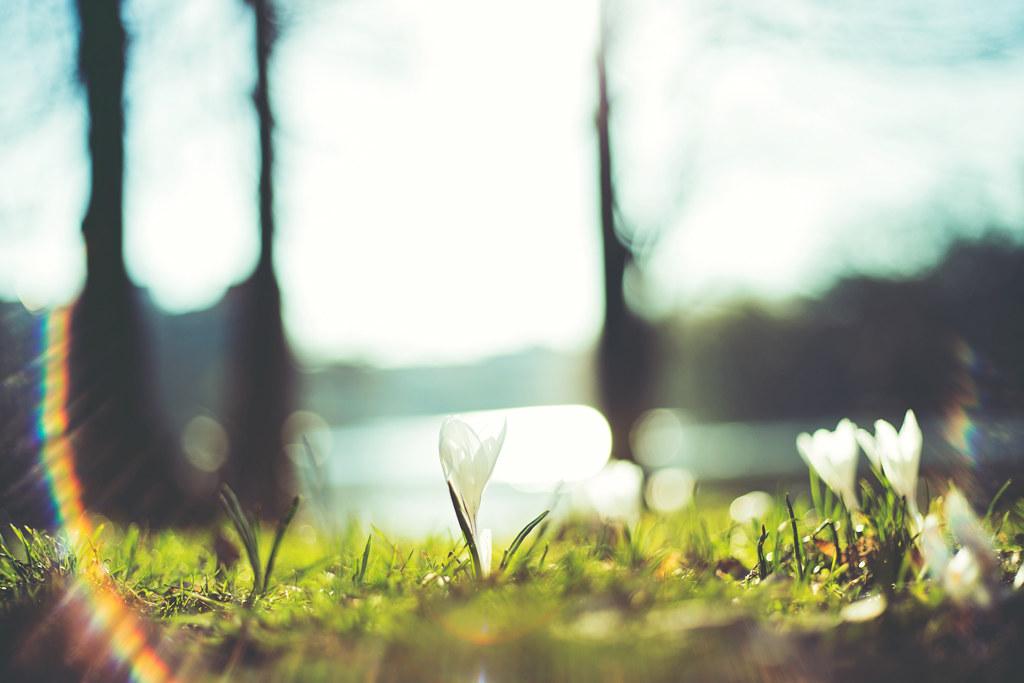 260/365 - spring