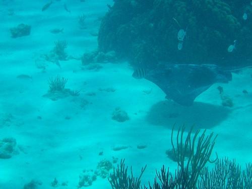 underwater28 stingray snorkel
