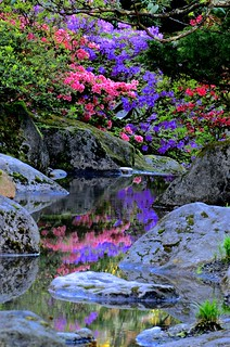 Spring Colors-Seattle Japanese Garden