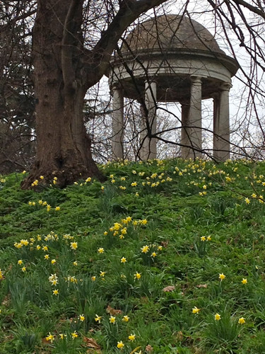 Kew Gardens folly and daffodils