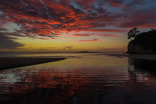 newzealand beach sunrise auckland northshore nz pohutukawa rangitoto brownsbay eastcoastbays