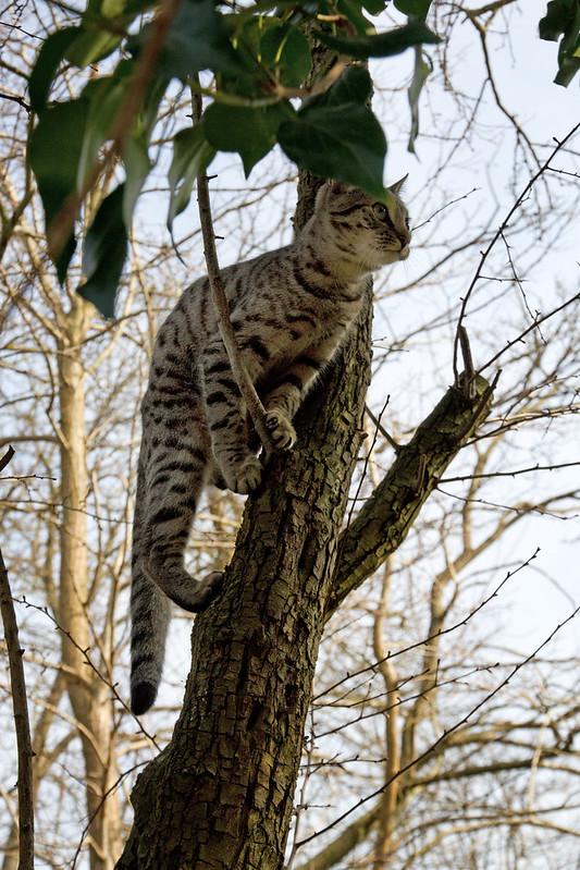 Gabriel likes to climb