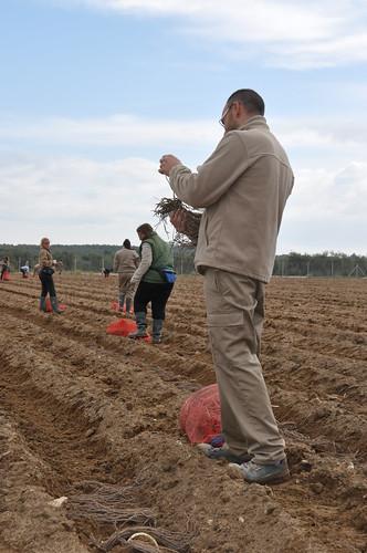 AionSur 16697695929_89fbd10670_d La finca El Alabardero vuelve a estar operativa con la plantación de espárragos y viñas Empresas Formación y Empleo