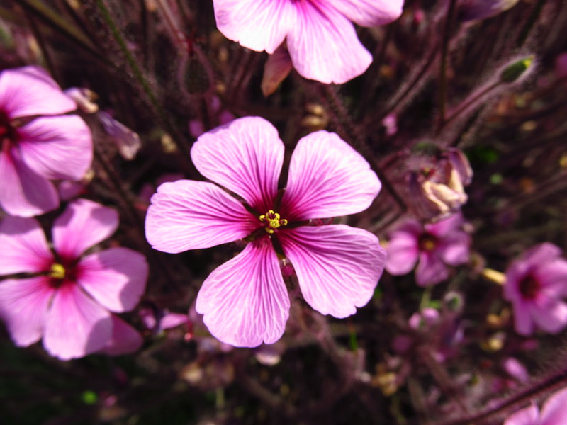 Jardim Botânico Flores - AgendaBerlim.com Foto Pacelli Luckwu