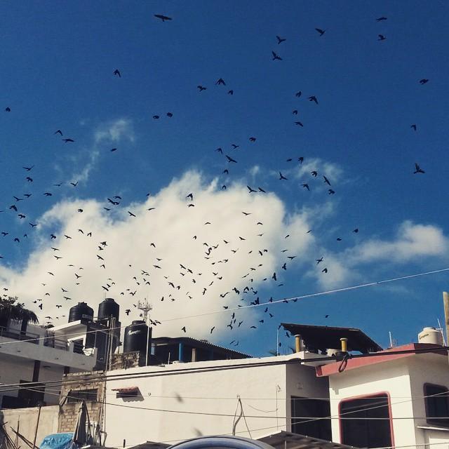 linnut, Sayulita, Meksiko