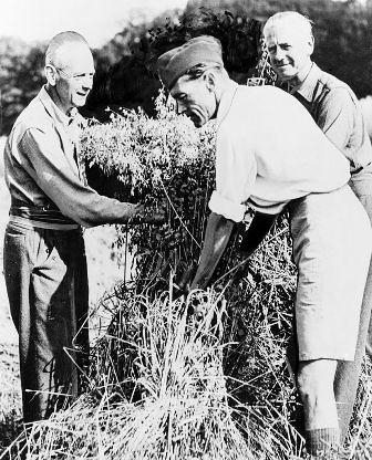 Martin Eisenbeck,Erich Alfred Breuning y Werner von Boltenstern trabajando en una granja