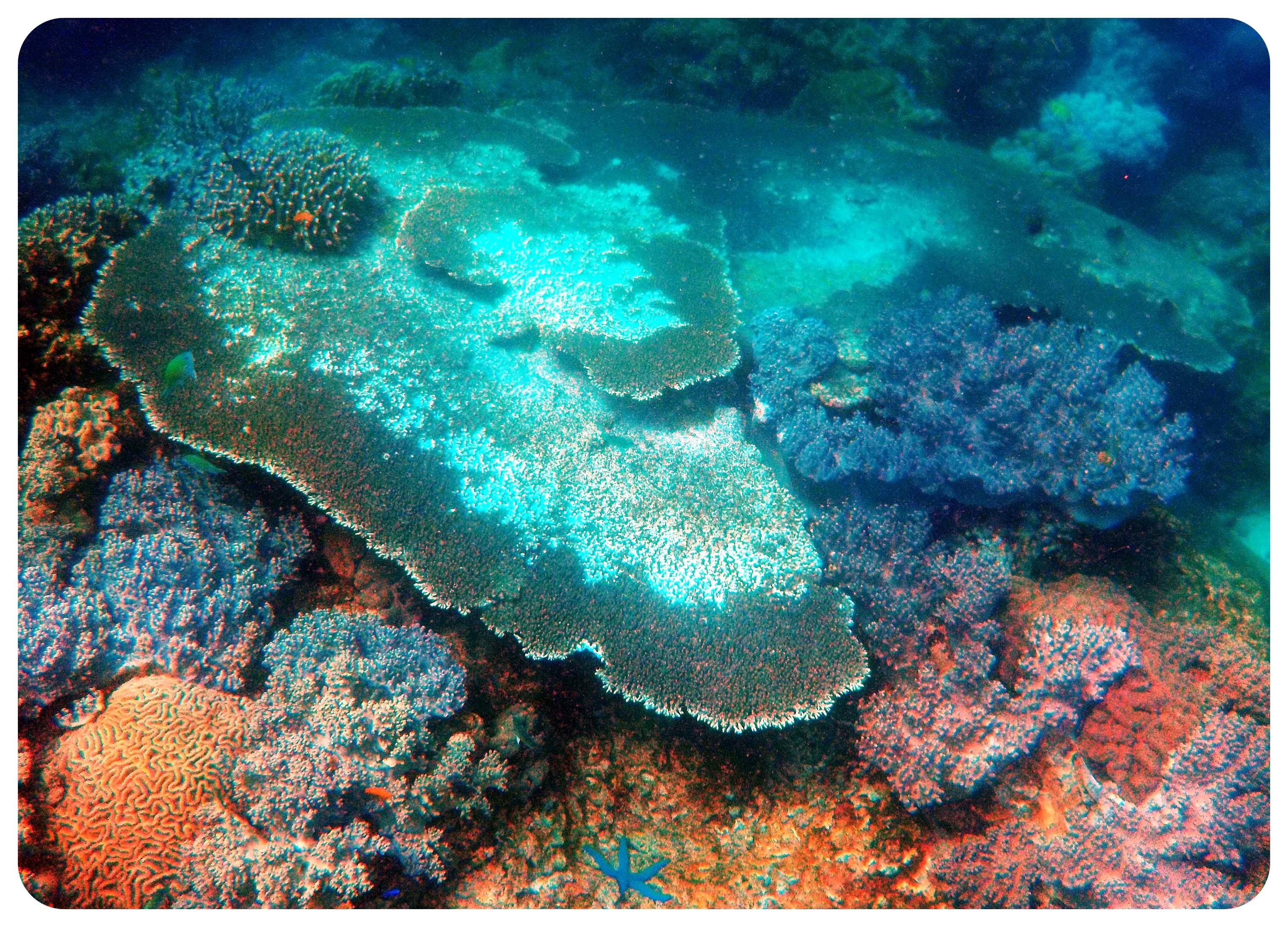 underwater world apo island philippines